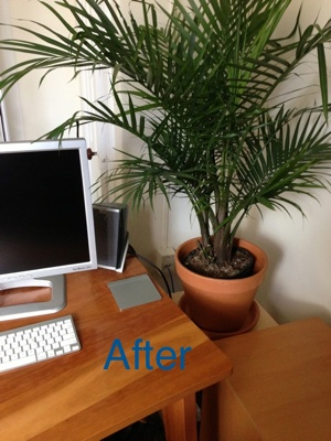 My beautiful new palm tree!